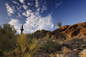 feature photo