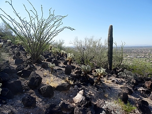 Basalt Trail - Deem Hills, Arizona • Hiking on