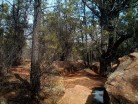 Mogollon Rim Interpretive Trail #615