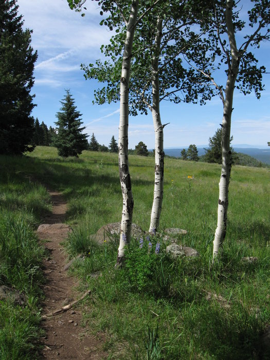 Aspen Nature Loop, Photo: hikearizona.com