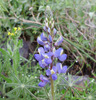 photo thumbnail #2