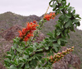 photo thumbnail #6
