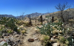 Gibson Canyon Trail #308