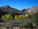 Hess Canyon to Salt River - SRC Wilderness