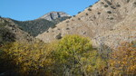 Cottonwood Saddle Trail #386 - Whetstones