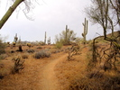 Ocotillo Trail - Sonoran Preserve North