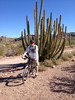 Ajo Mountain Drive - 21 mile bike loop - ORPI