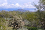 Esplanade Trail - Sonoran Preserve North
