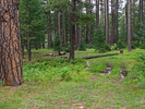 Camp Grasshopper - Mogollon Rim-C/Site#2