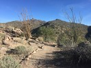 Upper Javelina Trail