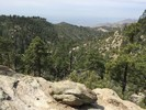 Mount Lemmon / Druid