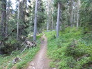 East Fork Trail #56