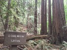 Main Trail - Muir Woods NM