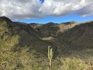 Bursera Trail - South Mountain