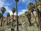 Lost Palm Oasis