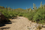 Gila Monster Trail - Saguaro NP West