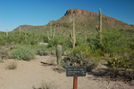 Ringtail Trail - Saguaro NP West