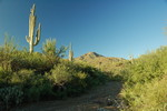 Brittlebush Trail - Saguaro NP West