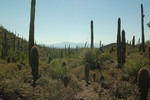 Coyote Pass - Saguaro NP West
