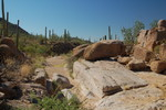 Bajada Wash Trail - Saguaro NP West