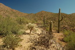 Mile Wide Mine - Saguaro NP West