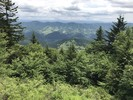 Whispering Spruce Trail - WV Highpoint