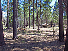 Camp Grasshopper - Mogollon Rim-C/Site#4